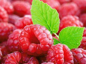 Сельхозпроизводителям возместят затраты на выращивание ягод