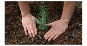 В Нязепетровском районе подрастает новый лес