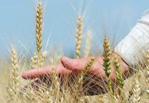 День фермера пройдет 27 июля на Южном Урале