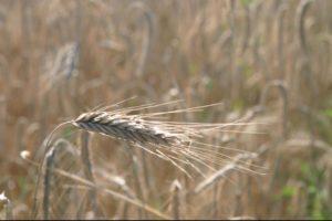 Конкурс для аграриев Нязепетровского района
