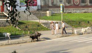 В Нязепетровске коз на улицах бывает больше, чем людей