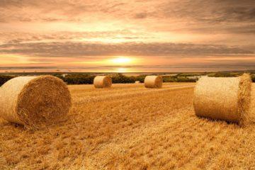 Фермерам Челябинской области помогут расти