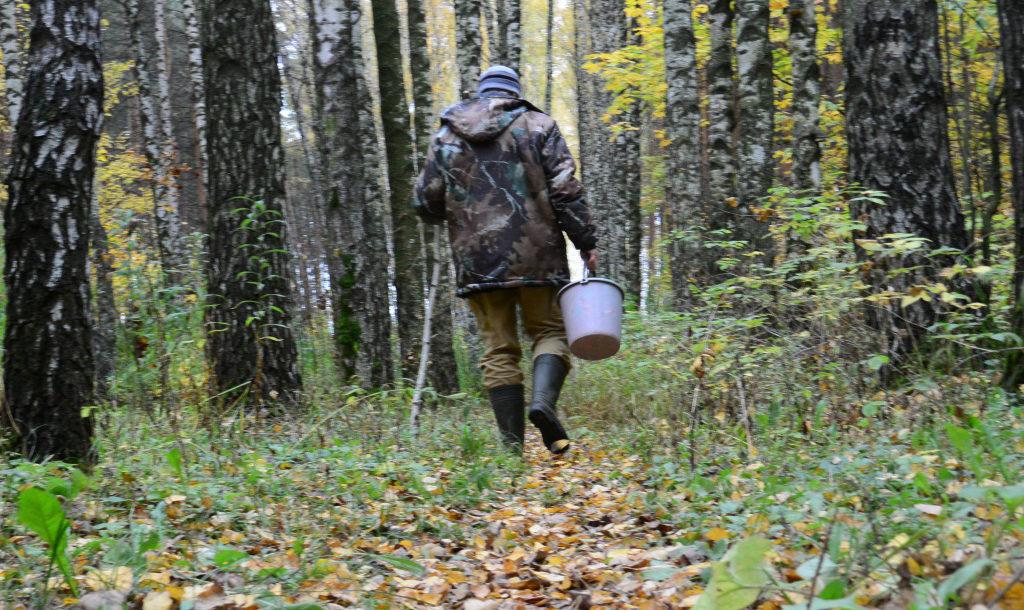 Лес не терпит беспечности