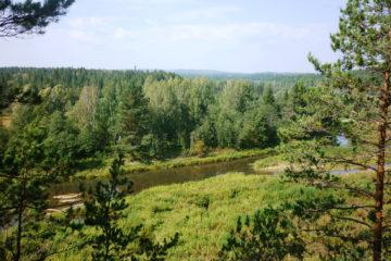 Арендатора леса в Нязепетровском районе оштрафовали
