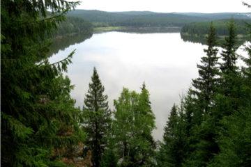 В Челябинской области наградили лучших лесоводов