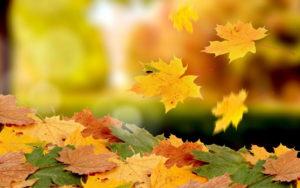 Золотая осень в Нязепетровске