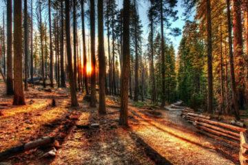 Леса Челябинской области проверят общественные инспекторы