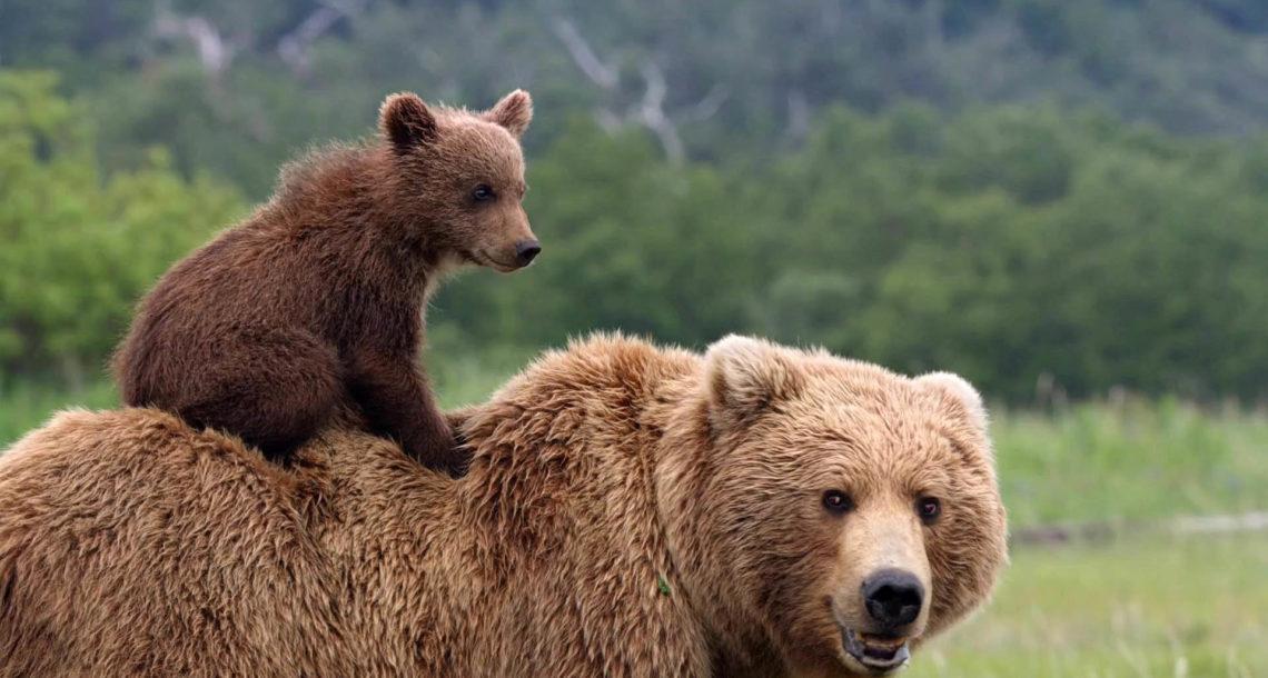 Медведь в Нязепетровске