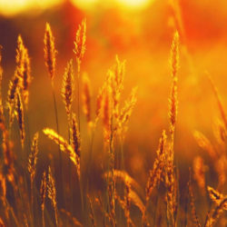 Челябинская область — лидер по урожаю зерновых
