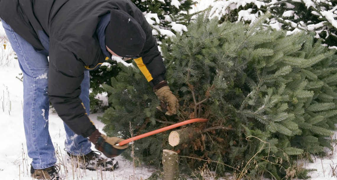 Леса Нязепетровского района взяли под охрану