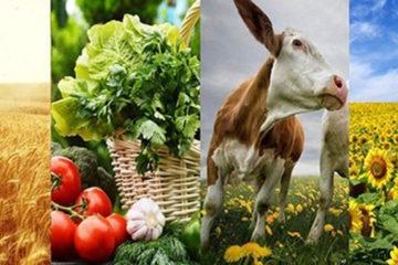 сельское хозяйство Нязепетровского района