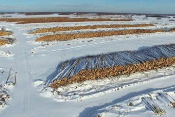 Жители Нязепетровского района могут выписать древесину
