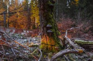 Леса в Нязепетровском районе очистят от бурелома