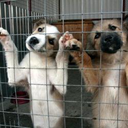 : В Нязепетровске создадут приют для собак