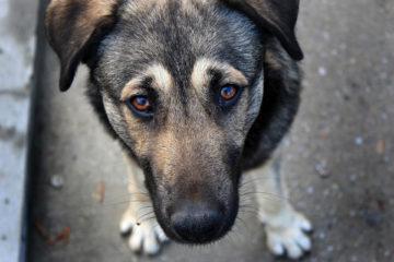 Бездомные собаки в Нязепетровске