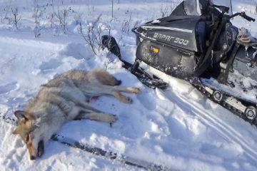 Охота в Нязепетровском районе