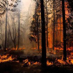 В Челябинской области наступает период пиковой пожарной опасности в лесах
