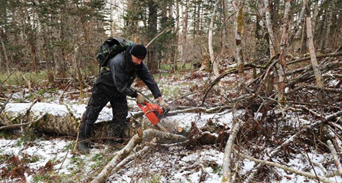 Валежник в лесах Нязепетровского района