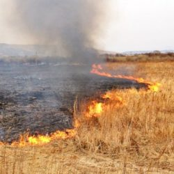 В Челябинской области горит трава