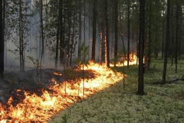 в Челябинской области сохраняется высокая пожарная опасность