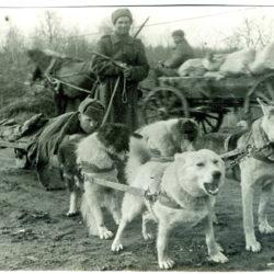 Собаки-герои Великой Отечественной войны