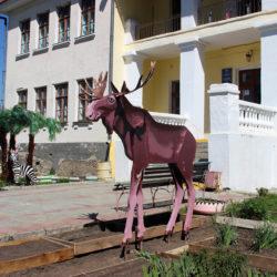 Лось поселился на СЮН г. Няязепетровска