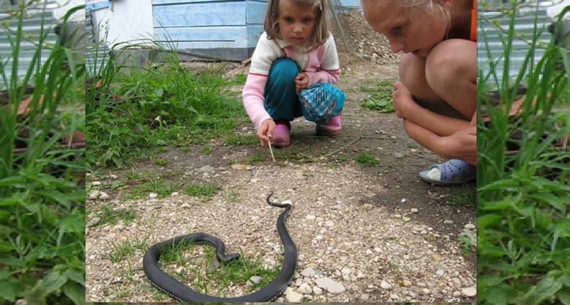 Жителям Нязепетровского района советуют держаться от змей подальше