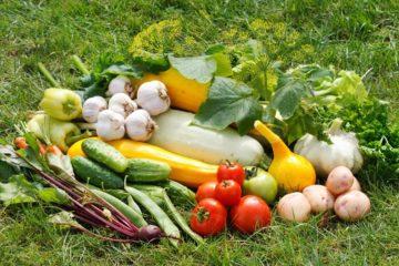 Садоводам выделят дополнительные средства