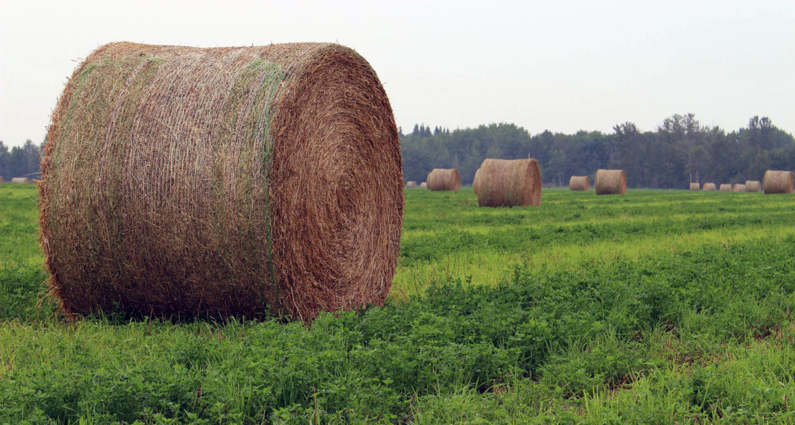 Сено из Нязепетровского района нравится самарским фермерам