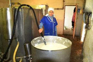 В Ташкинова переходят с молока на мясо