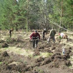 Работы по восстановлению леса в Нязепетровском районе