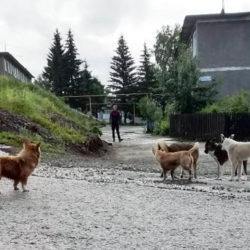 Собаки на улицах Нязепетровска