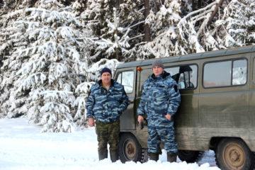 Ели в лесах Нязепетровского района под защитой