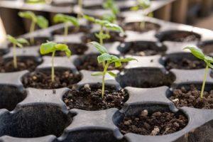Клуб садоводов возобновляет встречи