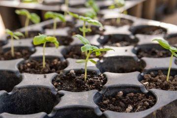 Садоводы переходят к практике
