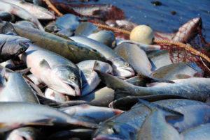 В Челябинской области определят водоемы, на которых ограничат промышленное рыболовство