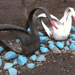 Лебеди постепенно исчезнут из дворов и с клумб