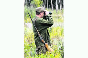 В Челябинской области увеличивается популяция диких животных