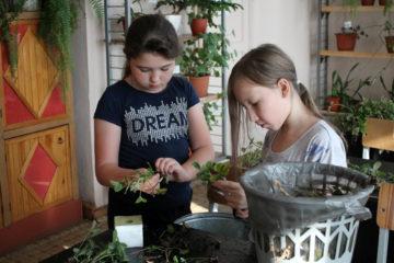 Юные выращиватели микрозелени